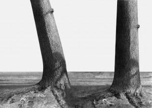 """""""Drzewo stojące I + II – wariant 1"""""""
