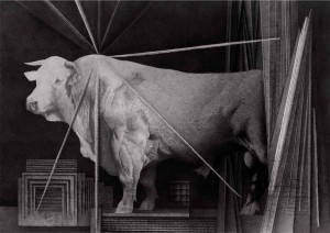 frąckiewicz byk bialy