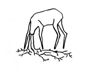 zwierzę-A-Bujak