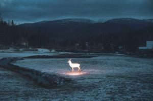Franko_Wiktor_The Killing of a Sacred Deer_Katalog
